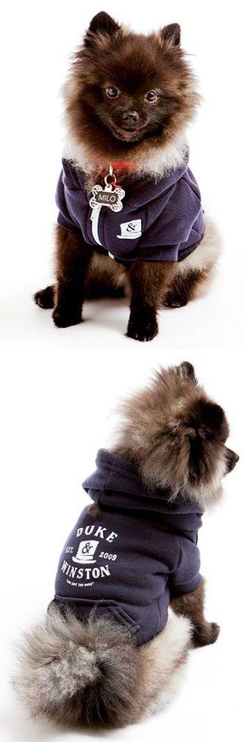 Duke & Winston Navy Dog Hoodie {so very cute & adorable} | duke-winston.com