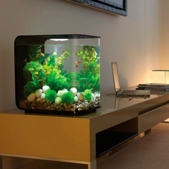 les 80 meilleures images du tableau aquariums sur pinterest aquariums id es d 39 aquarium et. Black Bedroom Furniture Sets. Home Design Ideas