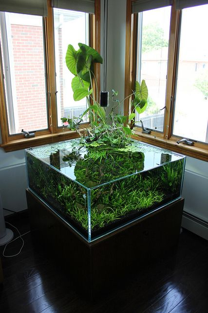 75 Gallon Shallow with emergent plants - 36x36x14