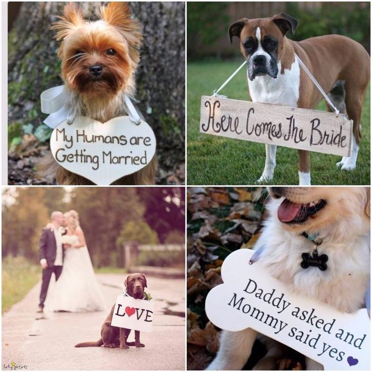 Dogs at weddings! Bring your dog to your wedding as a ring bearer with these cute dog signs