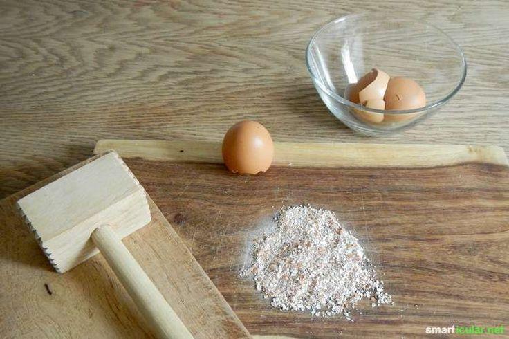 Eierschalen nicht wegwerfen, sondern zu perfektem Flüssigdünger verarbeiten