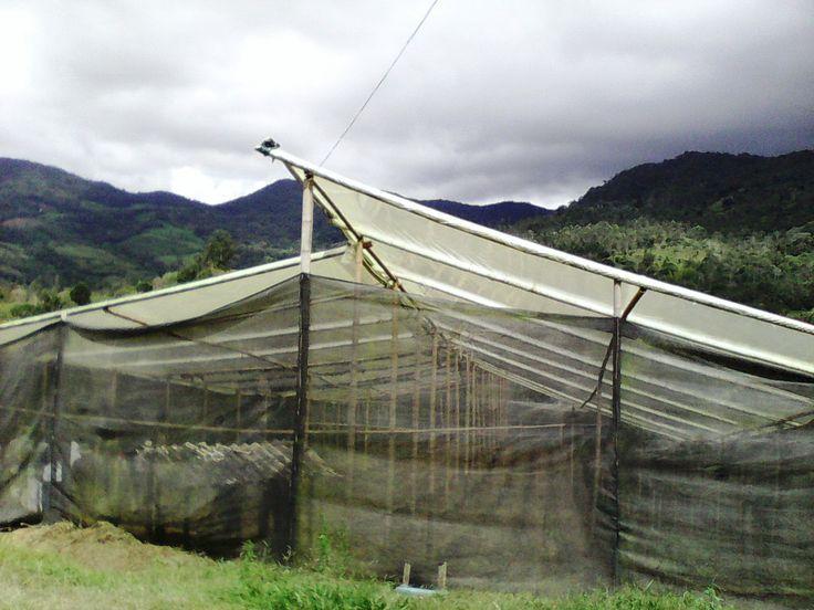 Invernadero para plantas de tomate orgánico. BIO-HUERTO de Humberto Escobar en Bitaco, La Cumbre. Valle del Cauca (CO).