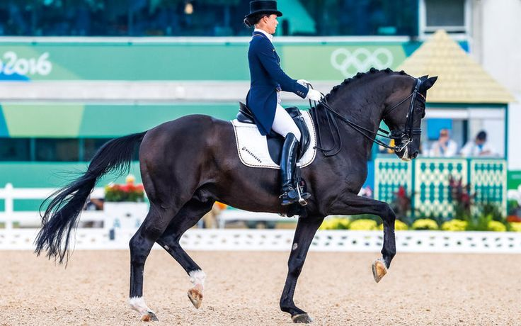 WBFSH-Rankings Dressage – worldwide No. 1. Jumping – Fine Lady No. 2. Eventing – top position consolidated #worldranking #hannoververband #successallovertheworld
