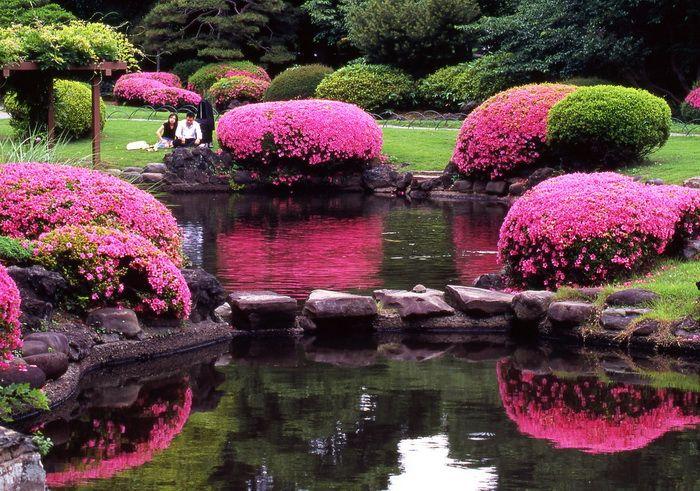 самые красивые сады японии: 20 тыс изображений найдено в Яндекс.Картинках