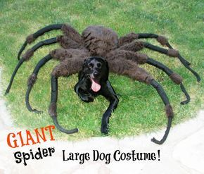 Giant Spider Dog Costume! More