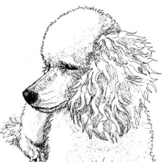 1000 ideas about poodle tattoo on pinterest dog tattoos pet tattoos and dog portrait tattoo - Dessin caniche ...