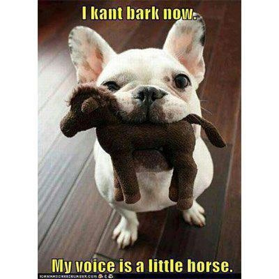 #dog #funny #quote #lol
