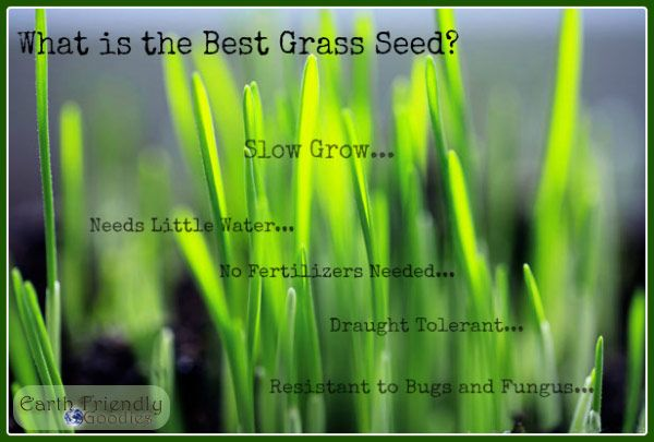 slow grow grass seed is the best grass seed / http://earthfriendlygoodies.com/271/low-maintenance-eco-lawn-best-grass-seed-ever
