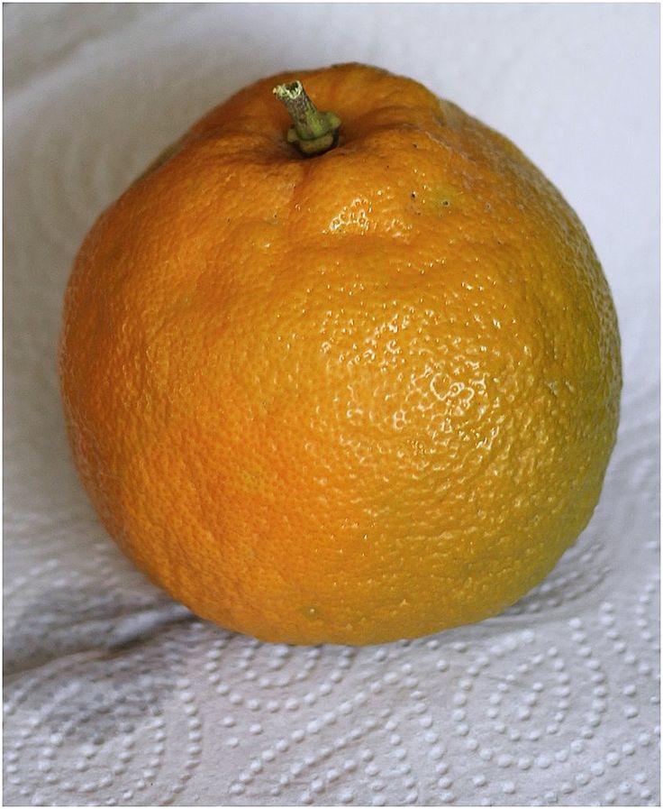 A bitter orange