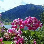 imagenes animadas de jardines con flores para whatsapp