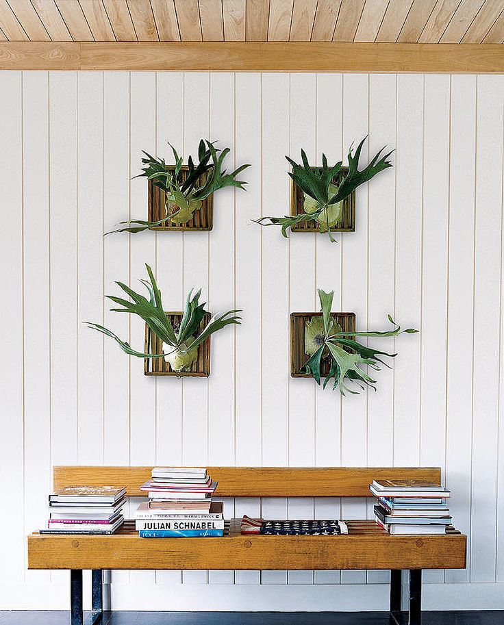 Wall Plant Decor 363 best plants images on pinterest | plants, flowers and air plants