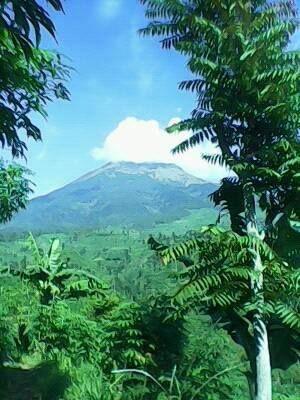 #mountain #sumbing #temanggung #tembakau