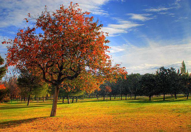 Información inabarcable: existe una gran cantidad de información que se encuentra en continuo cambio al igual que estos árboles de los que podemos encontrar muchos y cambiando continuamente.