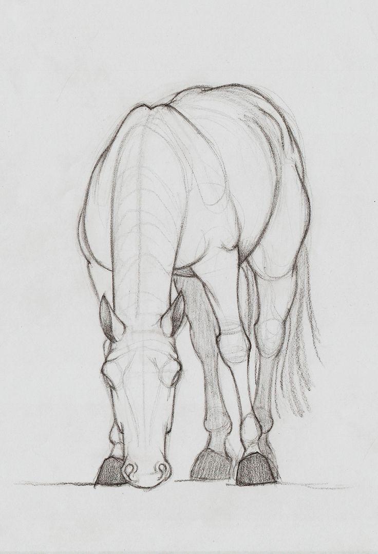 Artstation  Horse Sketches, Ozan Ünl�