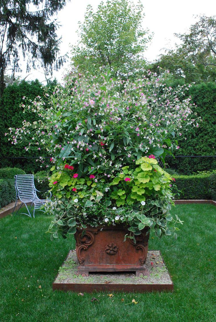 nicotianaGardens Ideas, Outdoor Ideas, Huge Planters, Colors, Gabby Gardens, Nicotiana, Bedrooms Windows, Gardens Summer, Flower