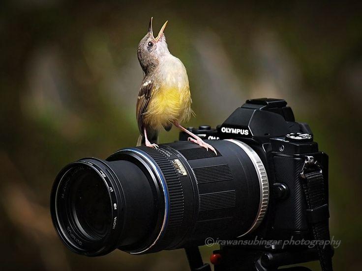 oohh, yeeaahh !! by Irawan Subingar