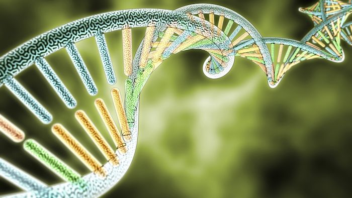 Sativa, Indica, or Hybrid? Cannabis Genome Project Hopes to Improve Hazy Labeling