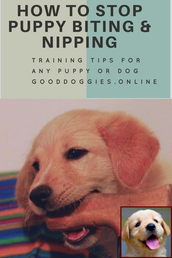 House Training A Puppy On Pads And Dog Training Courses With Cesar