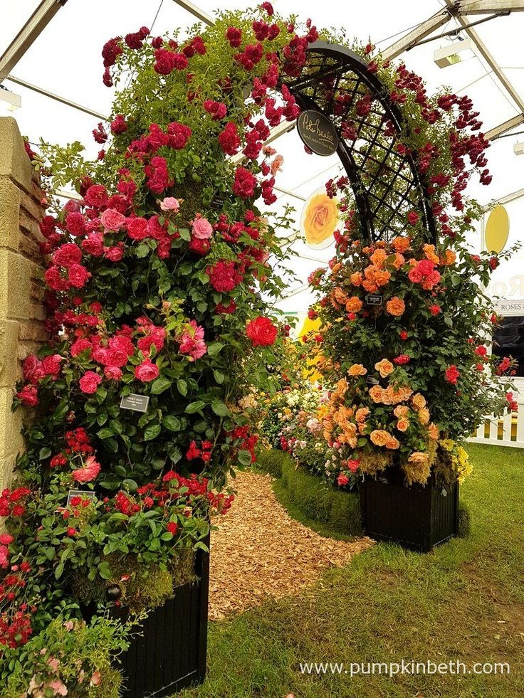 A beautiful rose arch, part of Peter Beale's Roses exhibit, which is pictured inside The Festival of Roses Marquee, at the RHS Hampton Court Palace Flower Show 2017.