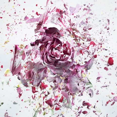 """Photographer Martin Klimas captures flowers in the midst of shattering in his photo series """"Rapid Bloom."""" To achieve the effect, Klimas froze the flowers with liquid nitrogen and shot them with an airgun."""