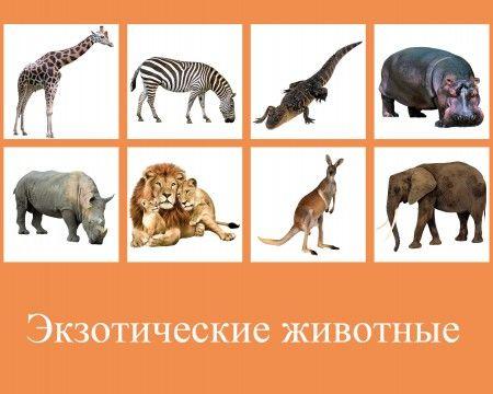 animals lotto