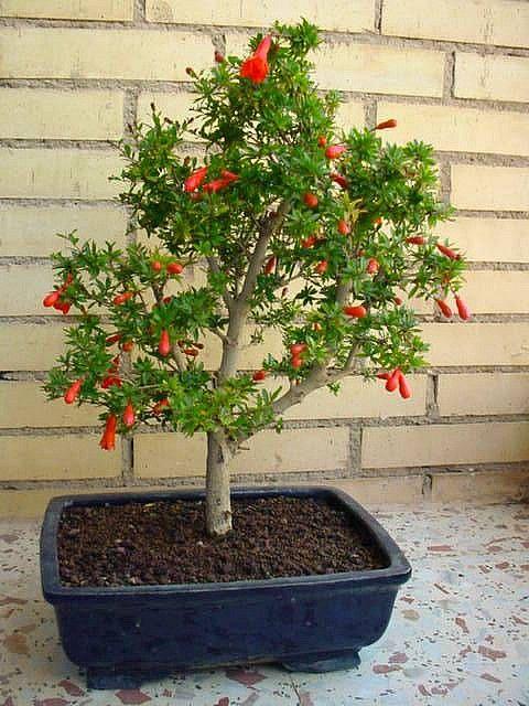 Bonsai trees miami / Harmony inn