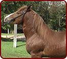 Compre Horse - Raças-Bretão