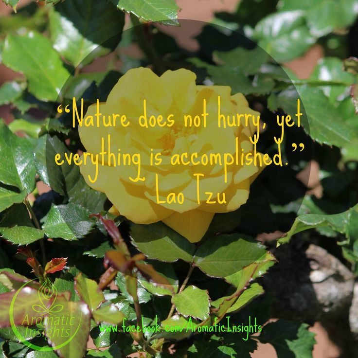 Nature takes time