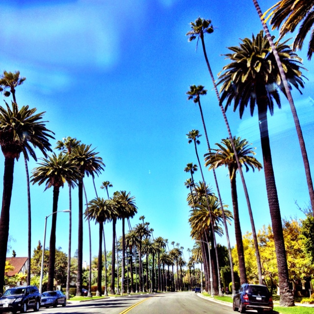 Typical street in  Beverly Hills, California.  Go to www.YourTravelVideos.com or just click on photo for home videos and much more on sites like this.