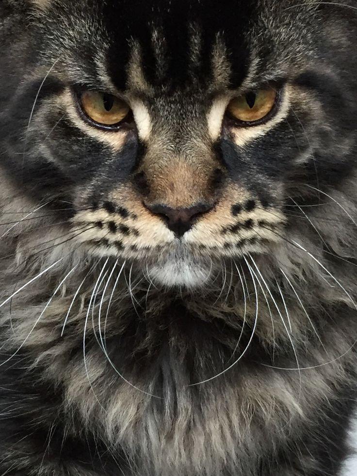 bengal cat rescue san diego