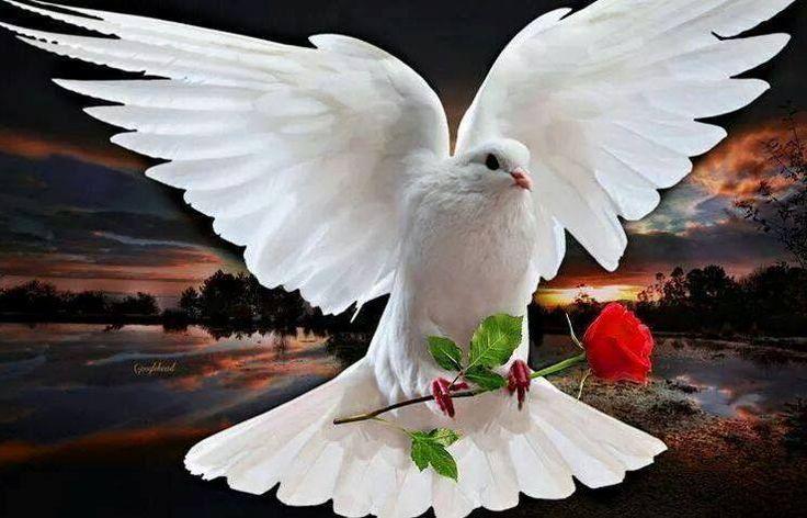 Oración al Espíritu Santo para quitar la ansiedad, el estrés y la preocupación. Padre bueno y digno de alabanza. A esta hora y ante tu presencia luminosa quiero esperar por tu Santo Espíritu para que la ansiedad no se apodere de mí y mi alma permanezca tranquila, en total confianza y