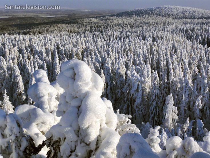 Verschneite Bäume in den Ounasvaarabergen in Rovaniemi im finnischen Lappland