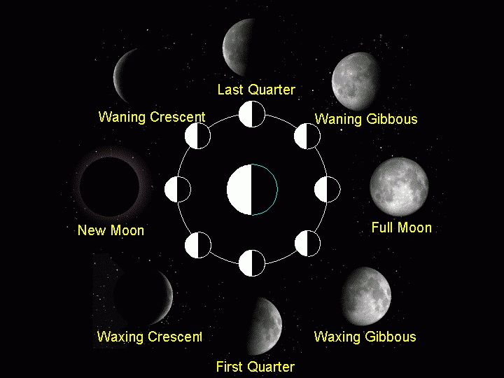 The Moon is one of the most familiar and beautiful objects in the night sky (and daytime too!). What makes the Moon even more interesting are the phases the moon goes through, making it look different on separate occasions. Take a look at these neat pictures of the moon phases. https://www.lunarland.com/pages/Pictures-of-the-Moon-Phases/60/