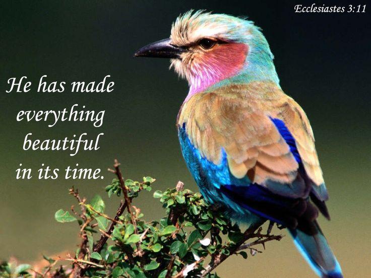 """Ecclésiaste 3:11 """"Toute chose, il l'a faite belle en son temps."""""""
