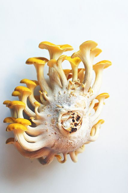 "lizettegreco: "" Inspiration for Enzo's ""research"" on mushrooms. """