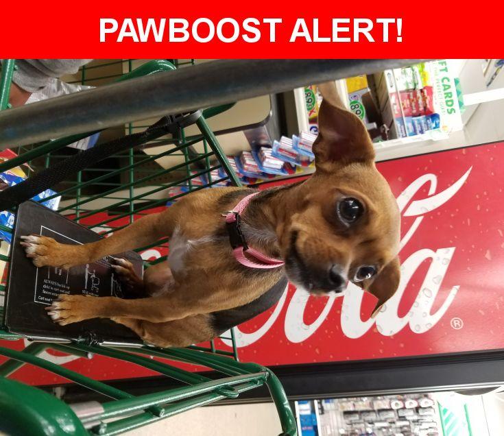 Please spread the word! Fuffy was last seen in Jacksonville, FL 32257.    Nearest Address: Near Old Kings Rd S & Rathbone Dr