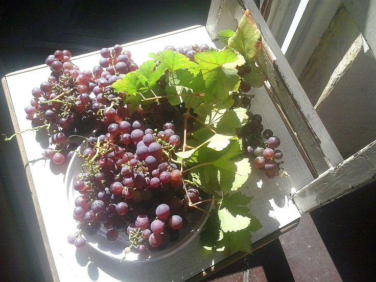 Miało być o winobraniu. Zapachniało nie tylko winem, ale także ... Nowy wpis na blogu Placu Francuskiego. http://blog.placfrancuski.pl/winobranie/