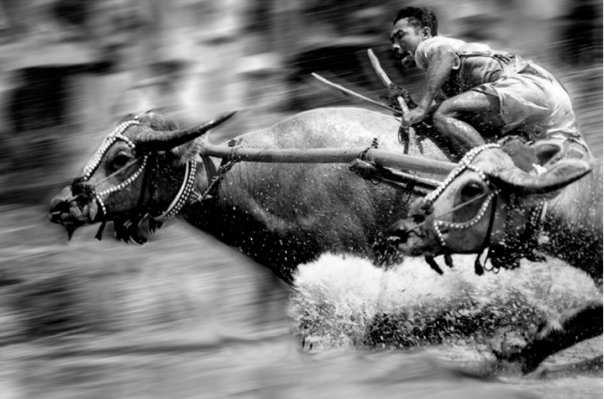 This is a photo of Buffalo Racing in Sumbawa. Our friends at Lombok Photographer took this photo--they were featured in our last issue about Lombok and Kuching. Nanang, the owner, offers photography classes and is a well-known local photographer in Indonesia.