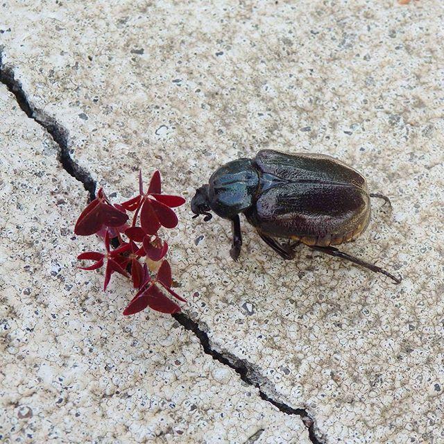 # bug #macro #nature #nice