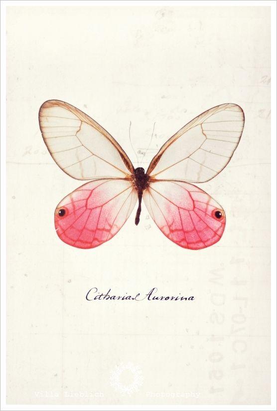 ikea butterfly