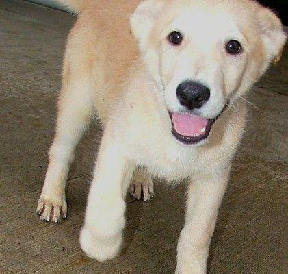 7 Superb Dog Adoption Pictures