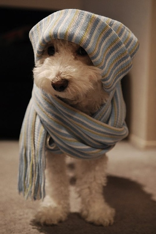 animal, cute, hat, puppy, scarf   Maybe all my grandpuppies would like thing??? Wendy, Becky and Ash, how about it??? lol