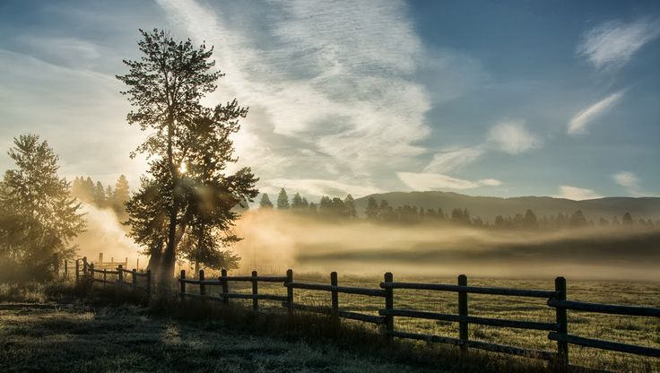 Pepe Le Gambá - Google+ - One Foggy Morning by Judy Rushing