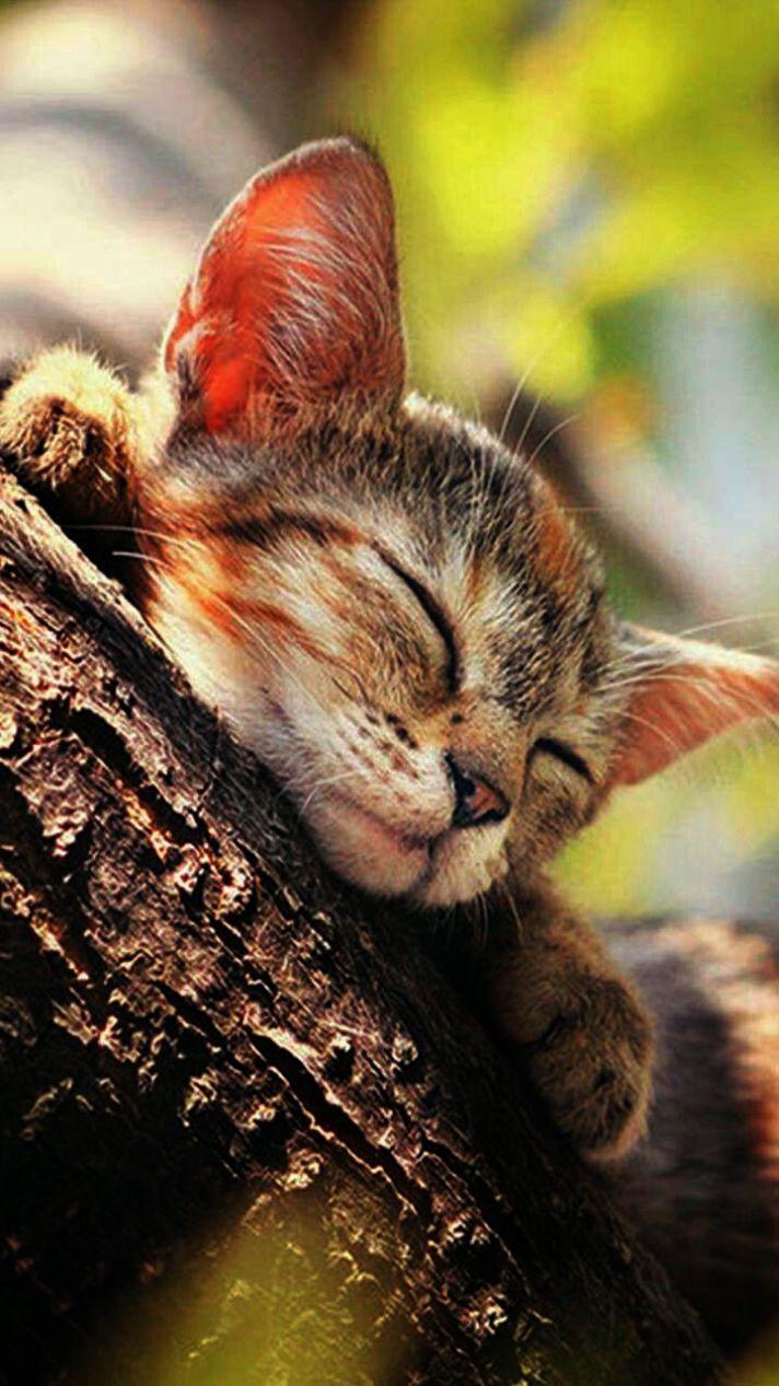 Kittens For Adoption Hudson Valley Ny If Dog Shelter Near Me Open Now Gatitos Lindos Mascotas Gato De Fieltro