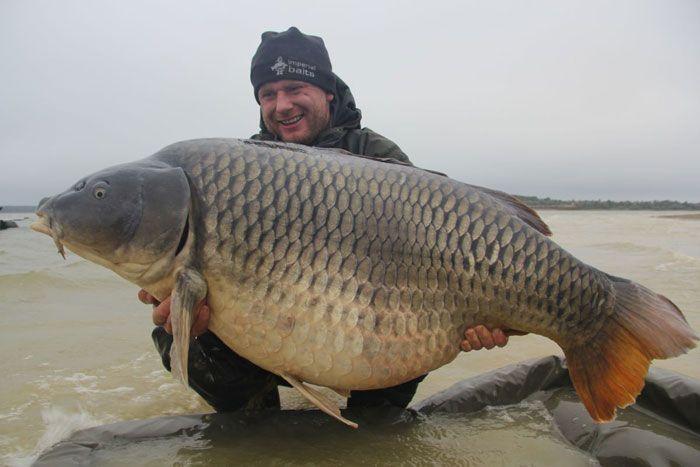 La commune star du lac du Der capturée à son poids record : 35,8kgs | Colinmaire.net - Passion de la pêche à la carpe en grands lacs