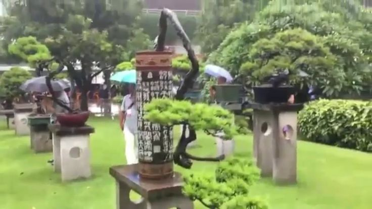 Bonsai trees the little brilliant of nature positive energy for environm...