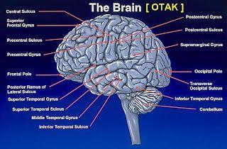 11 tips/cara meningkatkan memori kecerdasan otak secara alami
