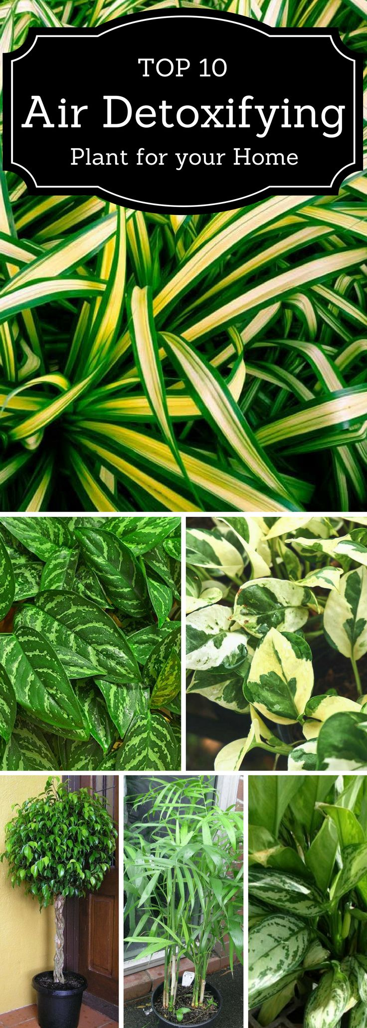 Top 10 Air Detoxifying Plants for Your Home #detox #plants