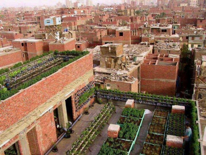 Egyptian rooftop gardens | Garden - Go Green | Pinterest