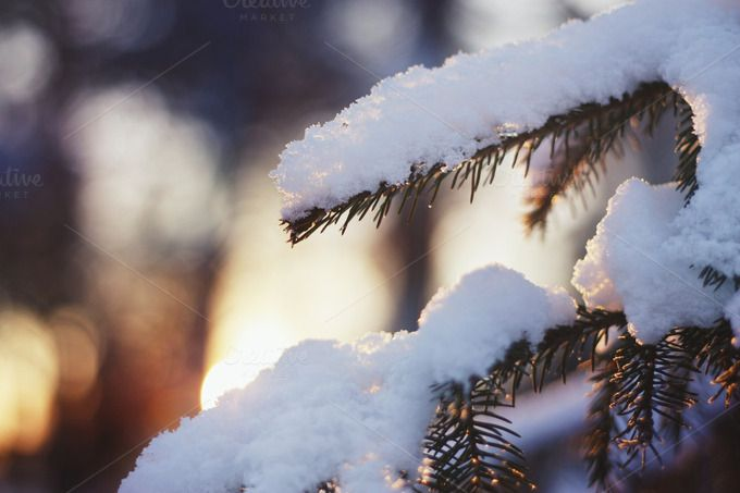Check out Spruce tree with fresh snow. Sunset by odpium on Creative Market